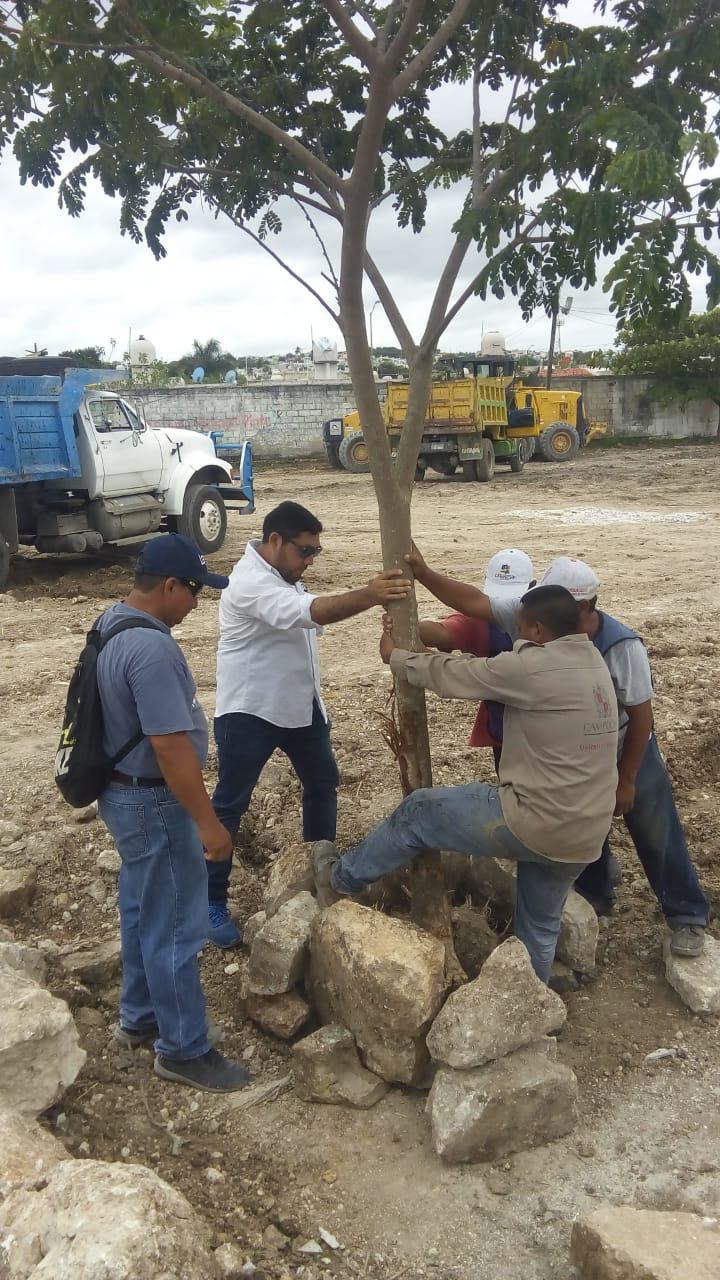 MEDIO AMBIENTE Y DESARROLLO SUSTENTABLE REALIZA LABORES DE REFORESTACIÓN